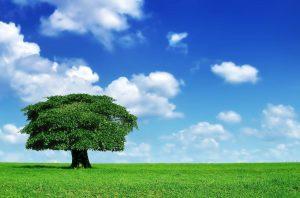 árbol r